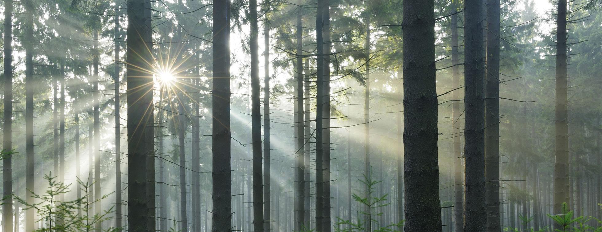 transparentforest