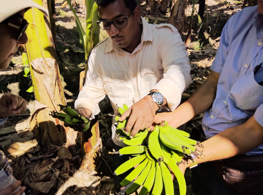 Banana growers