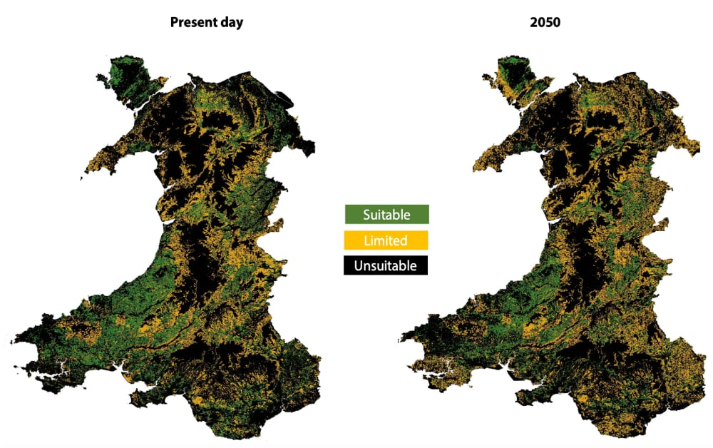 Oak planting suitability in Wales