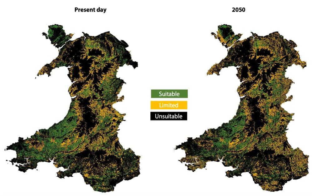 Oak planting suitability in Wales