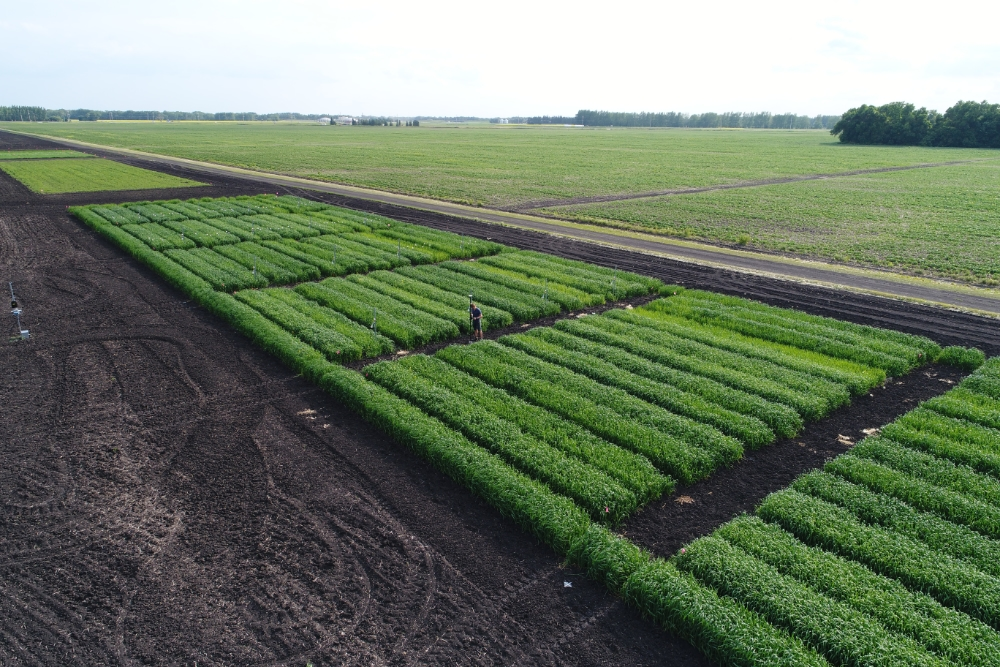 Crop trial plots