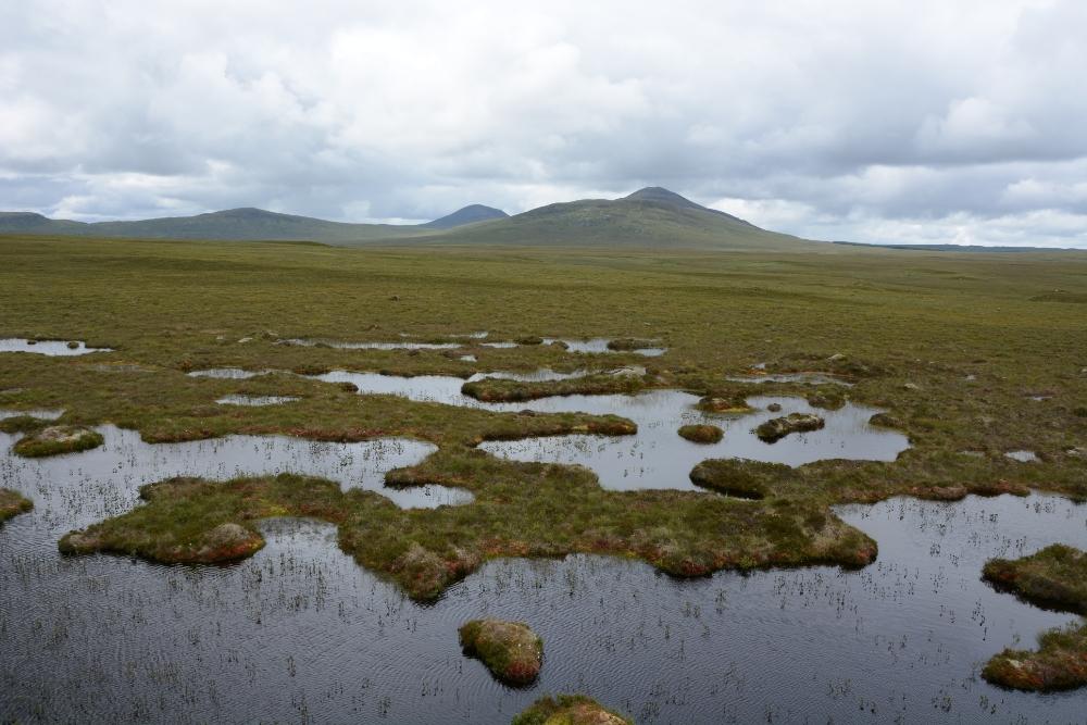 Scottish peatland